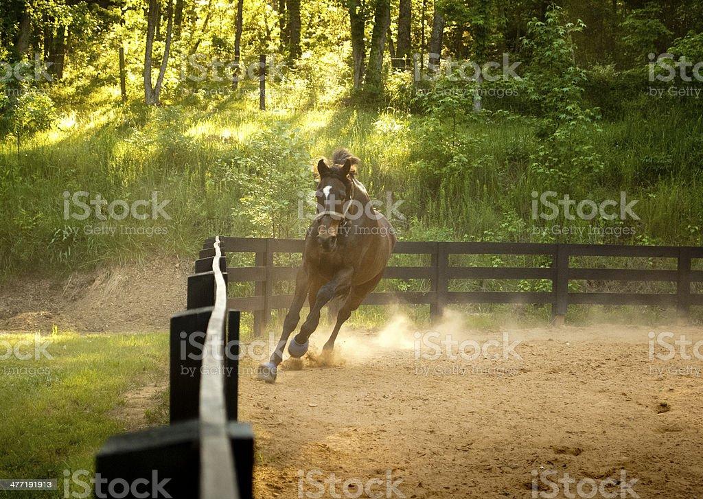 Practice Run stock photo