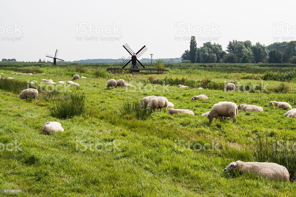 Prado en Volendam stock photo