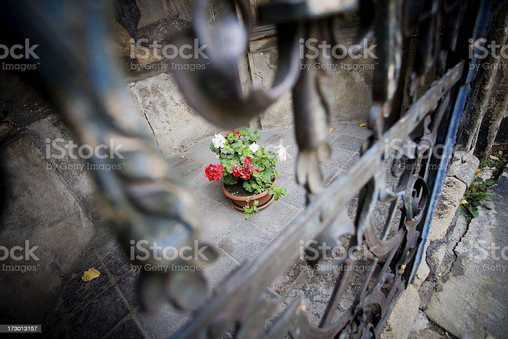 prague flowers royalty-free stock photo