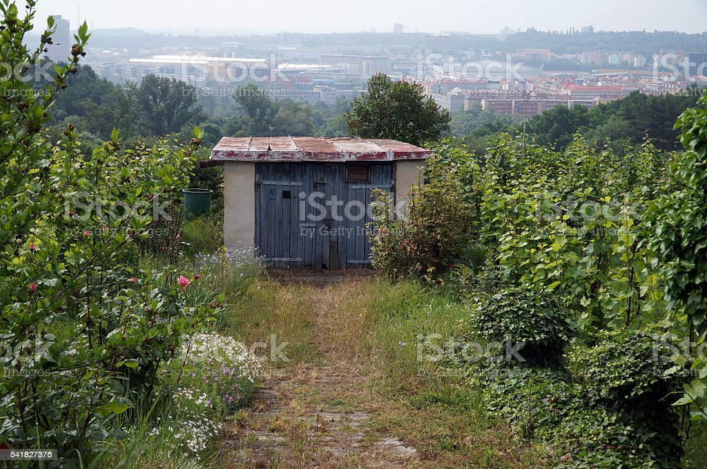Prague vineyard stock photo