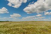 Prairie Bishop (Bifora Americana) and Clouds, Okalahoma