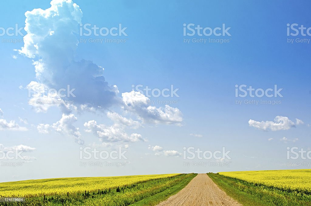Prairie Canola and Sky royalty-free stock photo