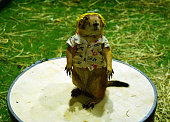 Prairie Dog is wering a shirt with yellow backpack