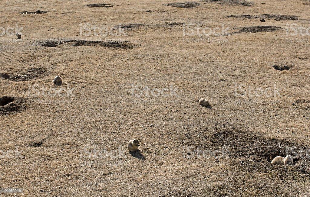 Prairie Dog Town stock photo