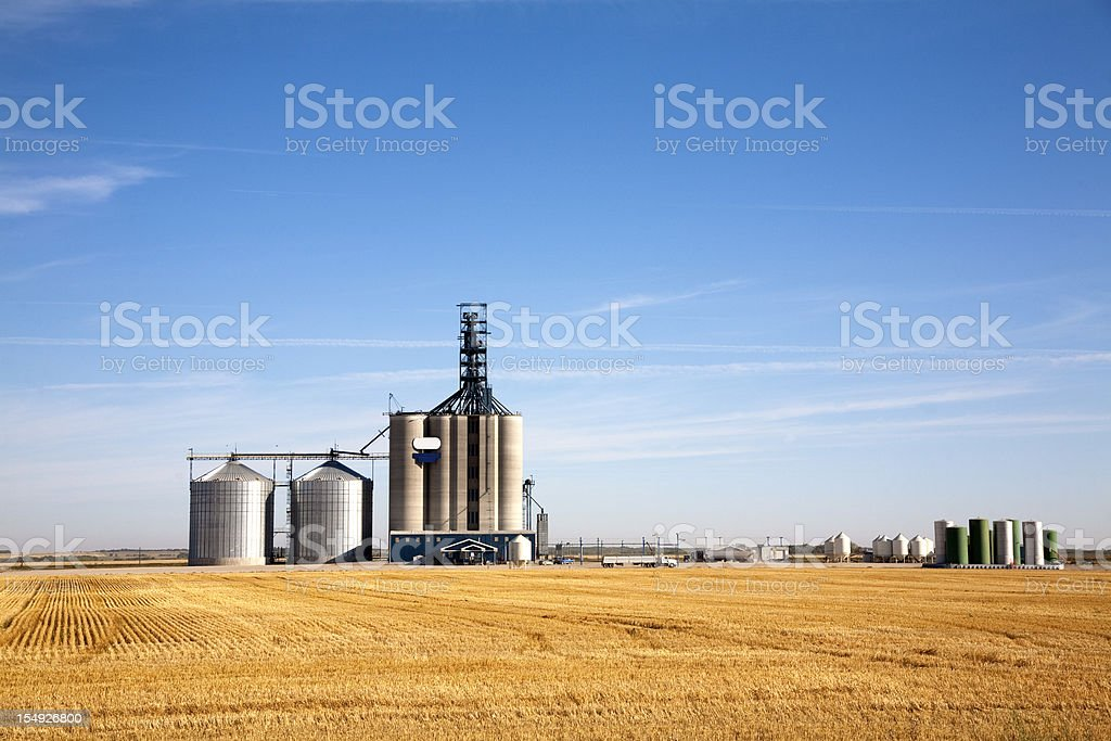 Prairie elevator and grain bin in a field of wheat stock photo