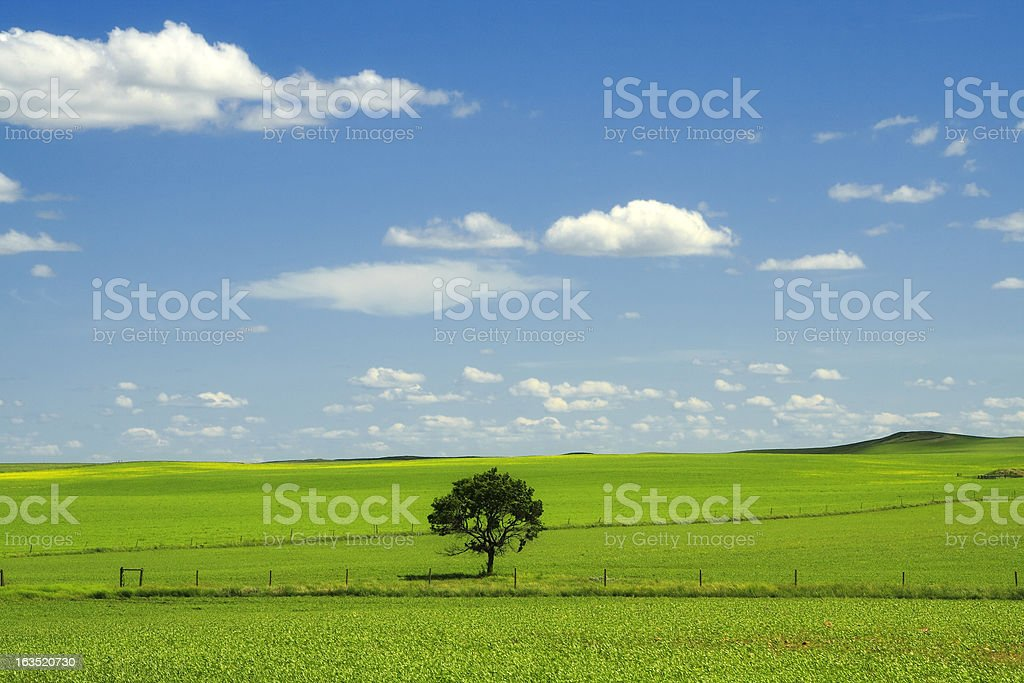 Prairie Field royalty-free stock photo