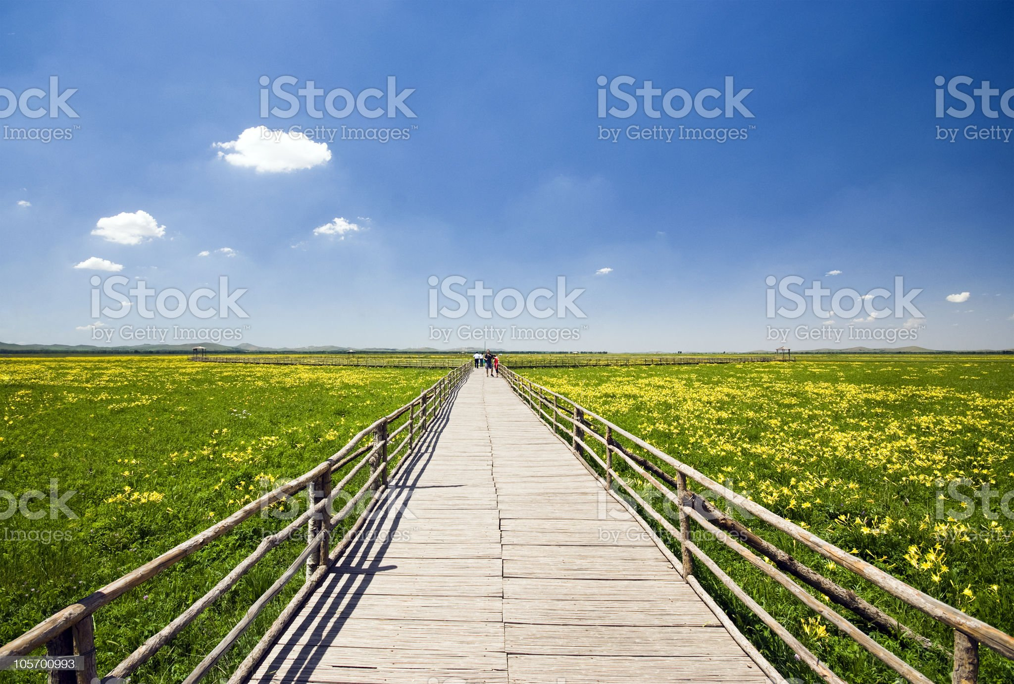 Prairie flowers and corridors royalty-free stock photo