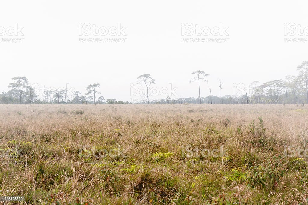 Prairie grass field in morning fog for background stock photo