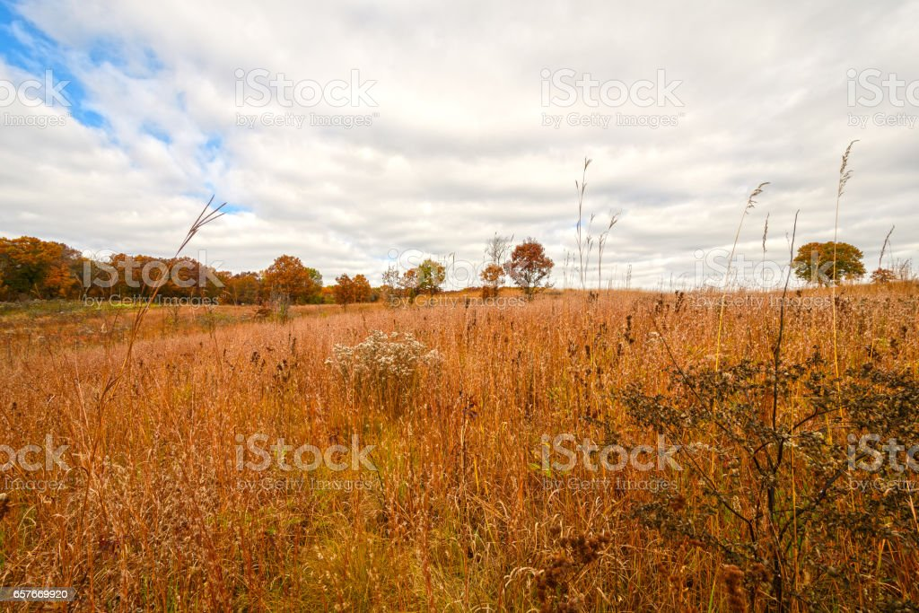 Prairie grass in Fall Colors stock photo