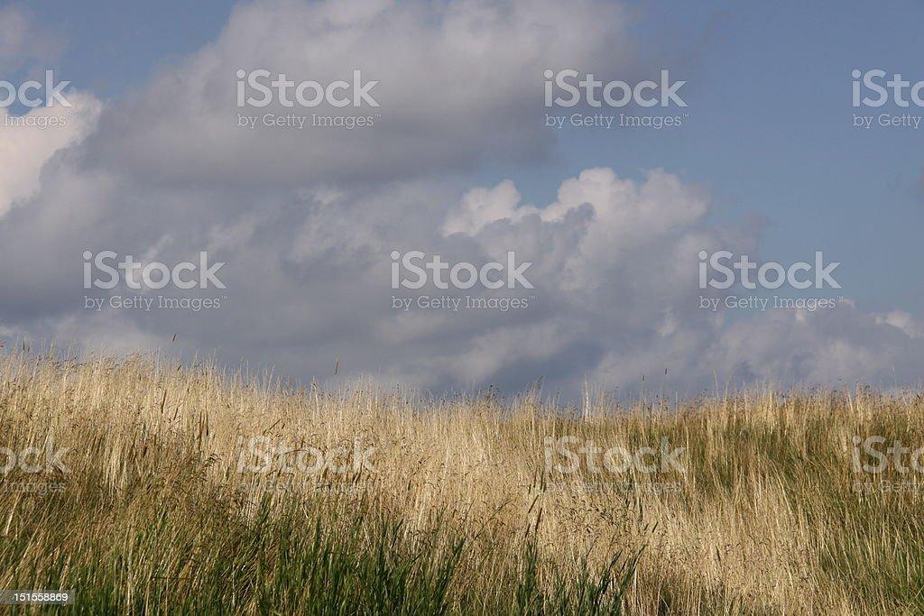prairie grass on golf course against cloudy blue sky stock photo