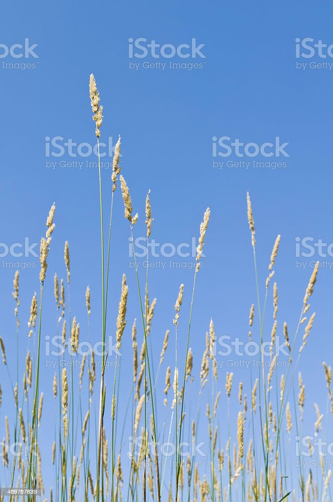 Prairie grass stock photo