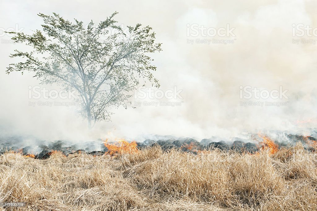 Prairie Grass Wildfire with Tree royalty-free stock photo