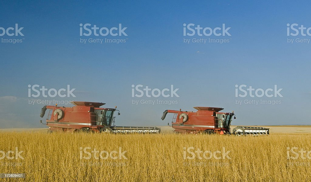 Prairie Harvest royalty-free stock photo