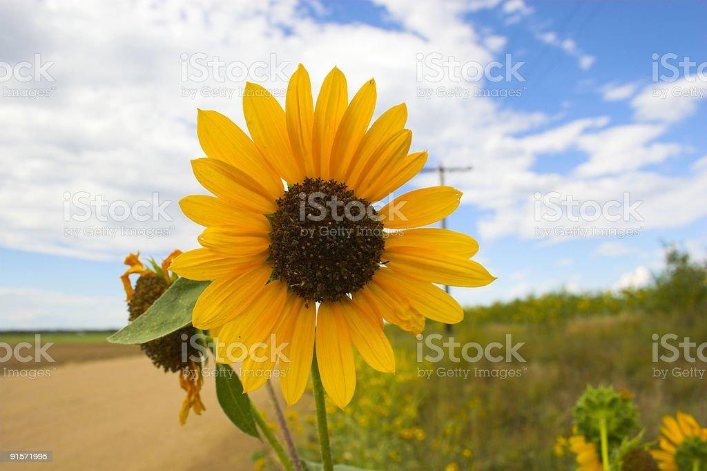 Prairie in bloom royalty-free stock photo