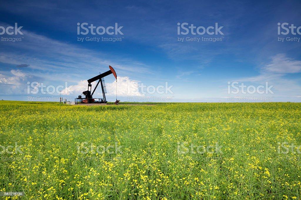 Prairie Oil Canola Field Saskatchewan stock photo