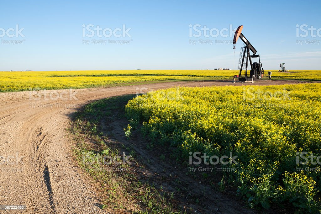 Prairie Oil Canola Field Saskatchewan stock photo