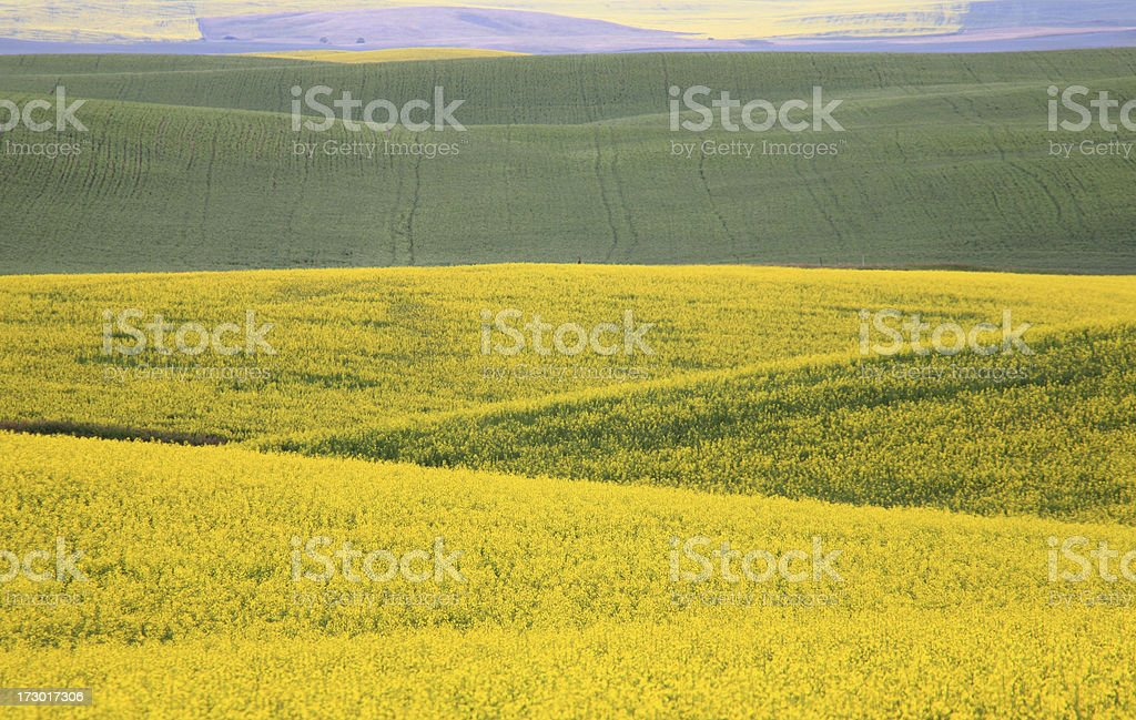 Prairie Quilt royalty-free stock photo