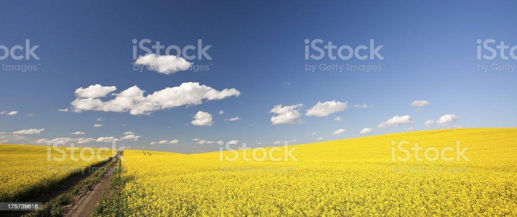 Prairie Road stock photo