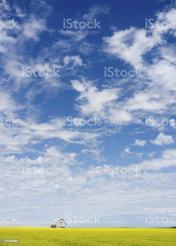 Prairie Sky Above Silver Barn and Yellow Canola Field royalty-free stock photo