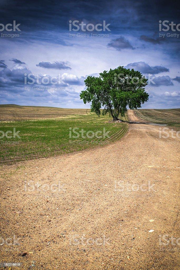 Prairie Tree royalty-free stock photo