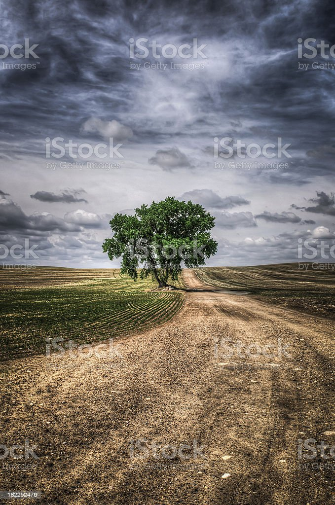 Prairie Tree royalty-free stock photo