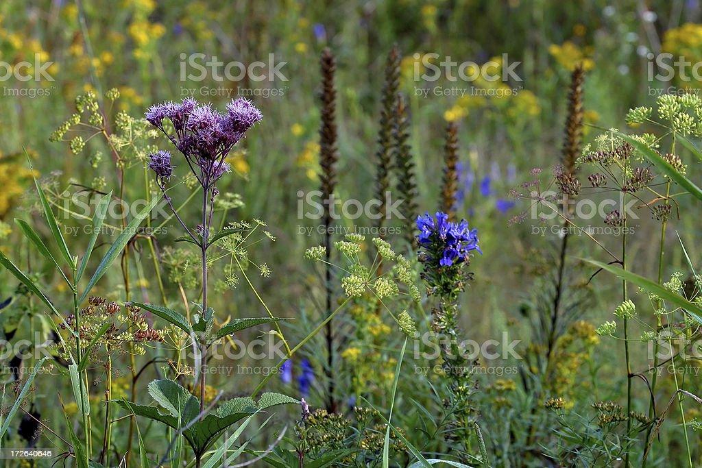 Prairie Wildflowers stock photo