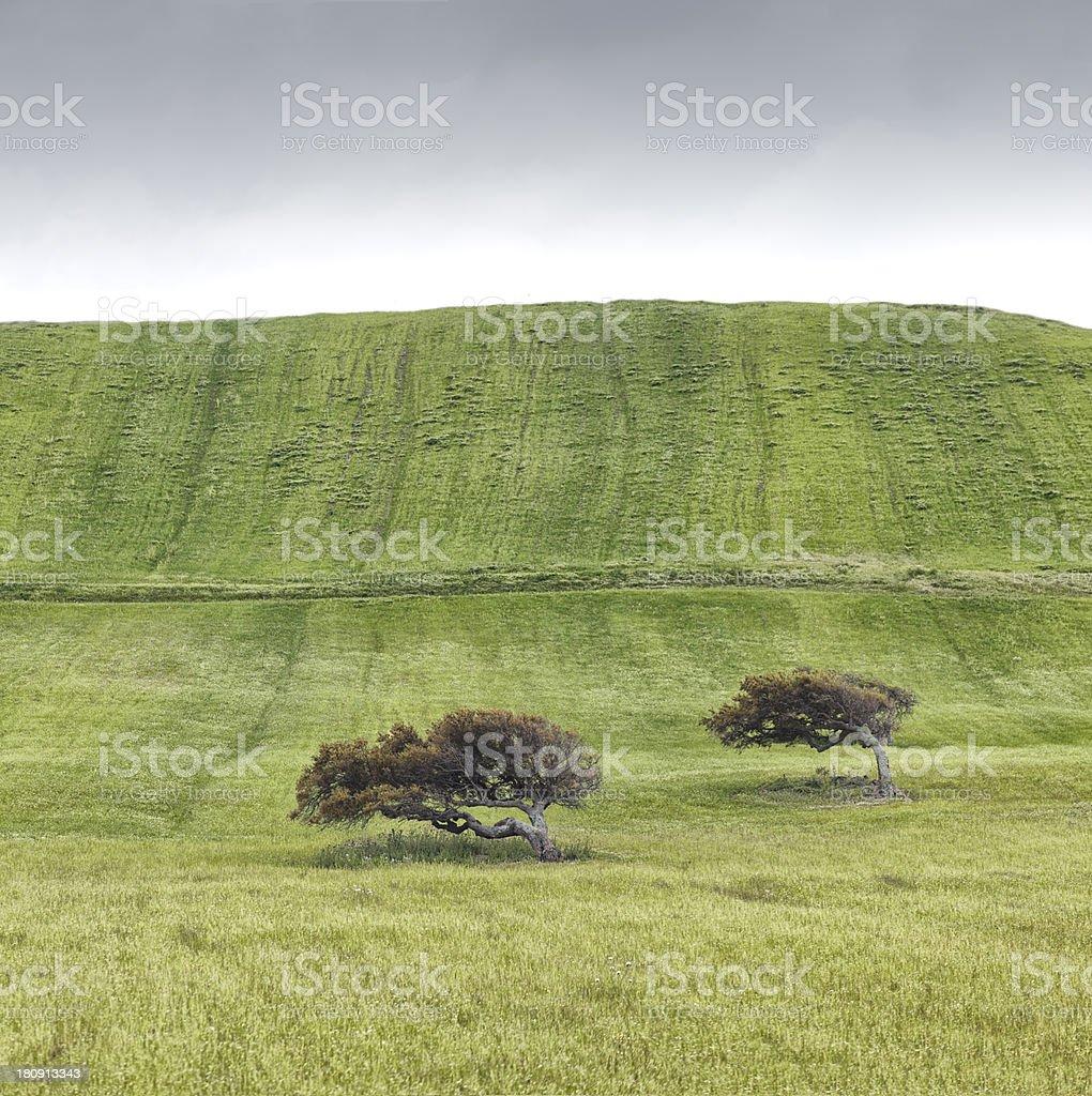 Prato verde con alberi stock photo