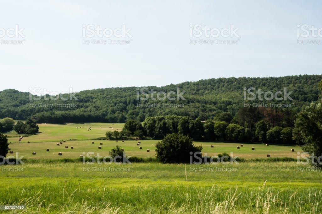 Prato verde con balle di fieno e alberi in Provenza, Francia stock photo
