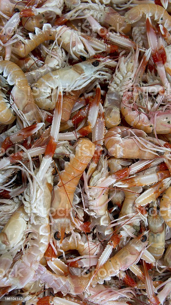 Prawns in the market stock photo