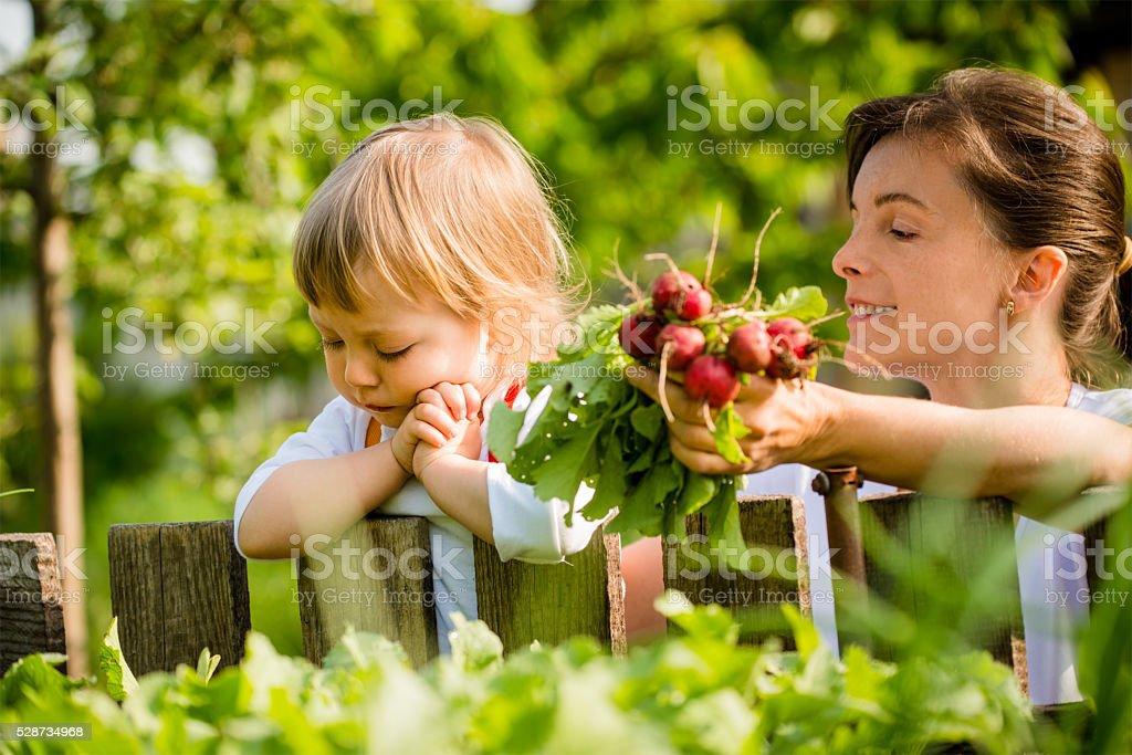 Praying for crop stock photo