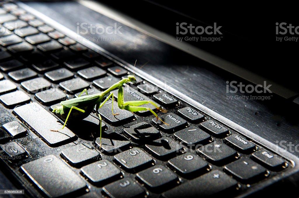 Praying mantis bug walks across a computer stock photo