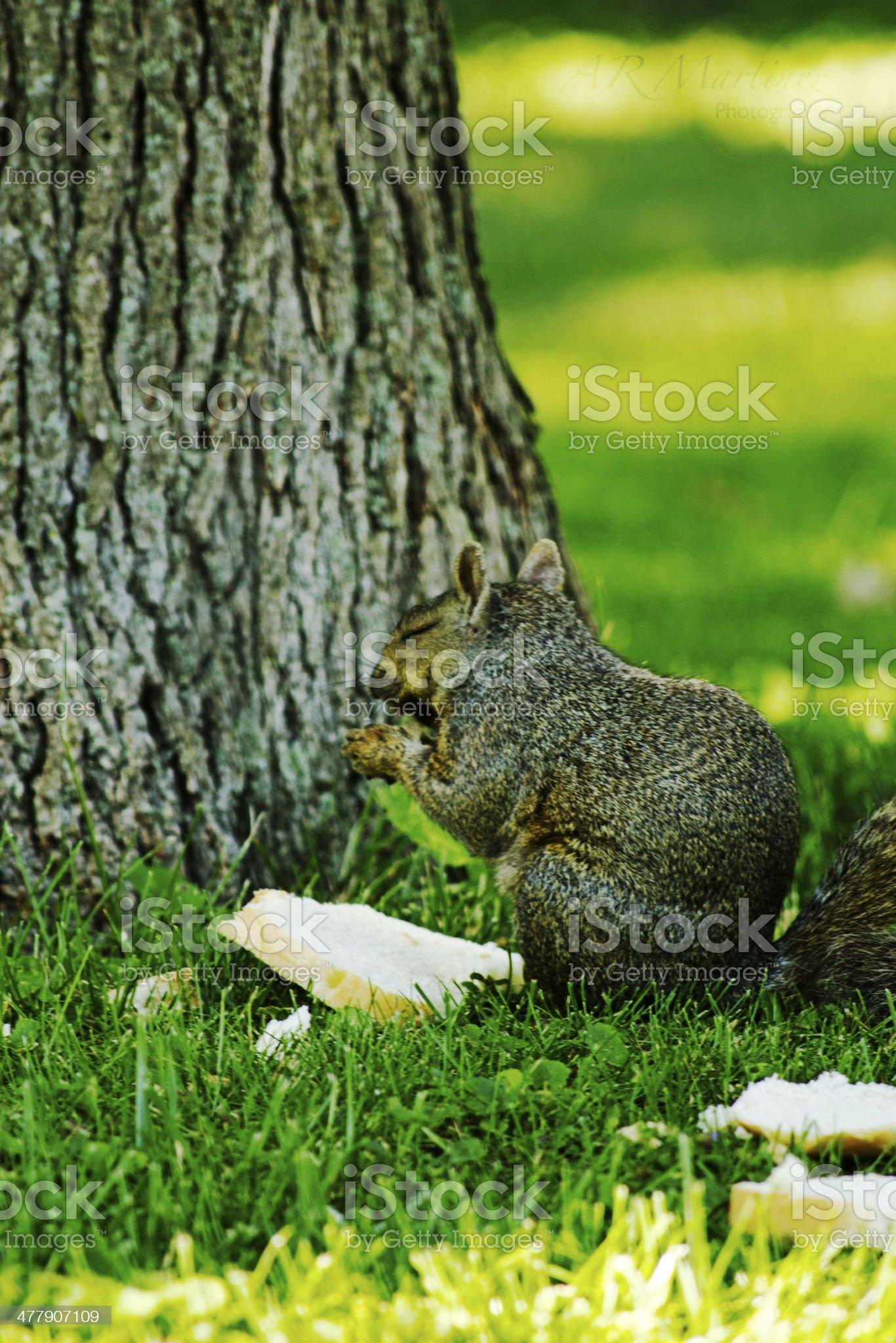 Praying Squirrel royalty-free stock photo