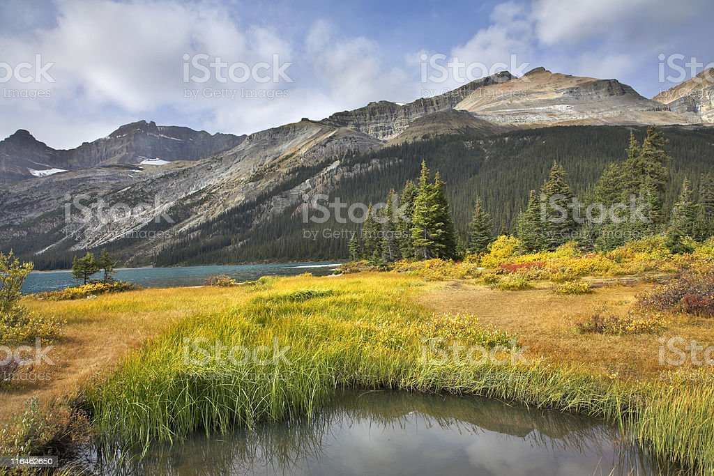 Precise a landscape. royalty-free stock photo