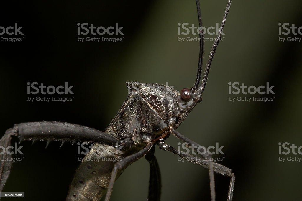 Predator stock photo
