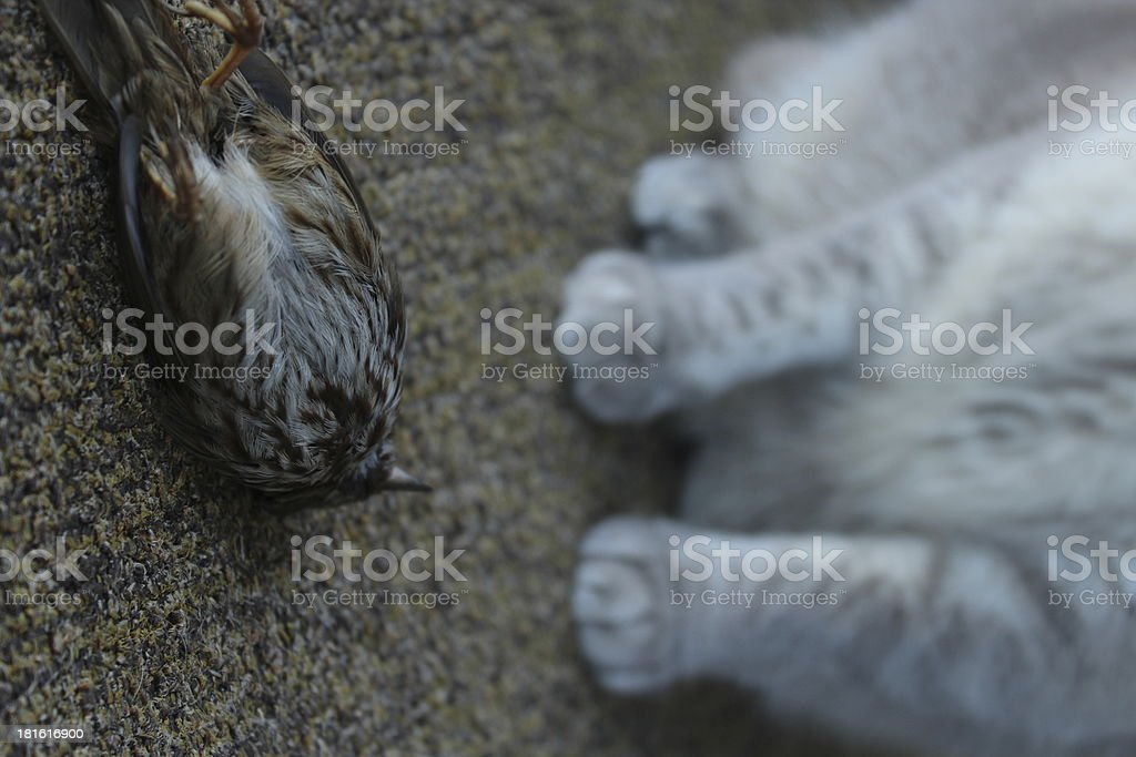 Predator royalty-free stock photo