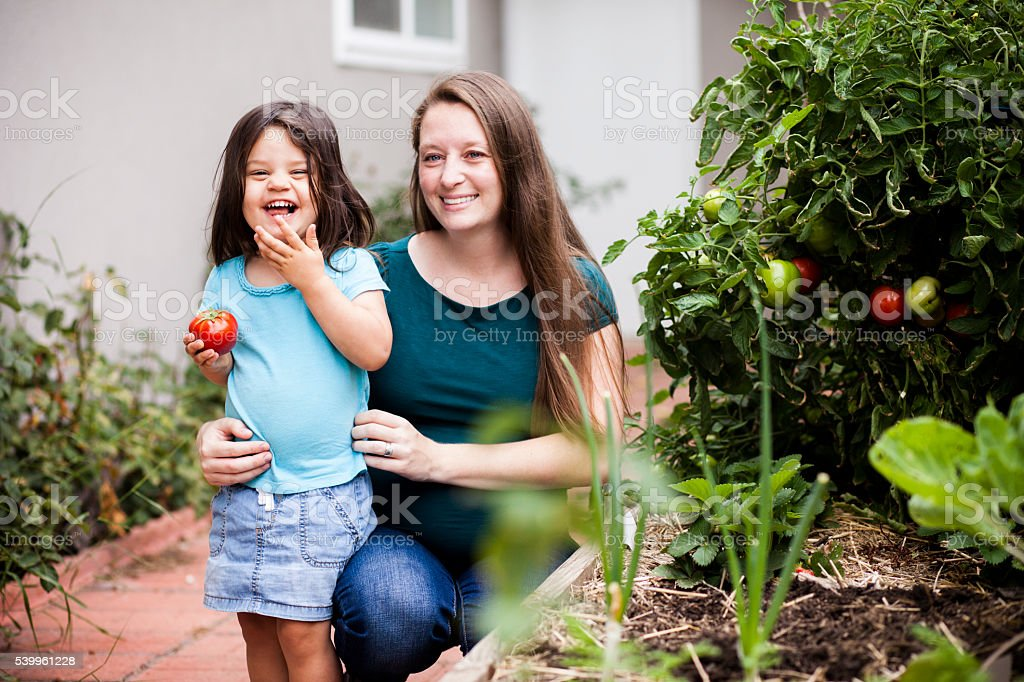 Pregnant Mother Picking Tomatoes with her Daughter stock photo