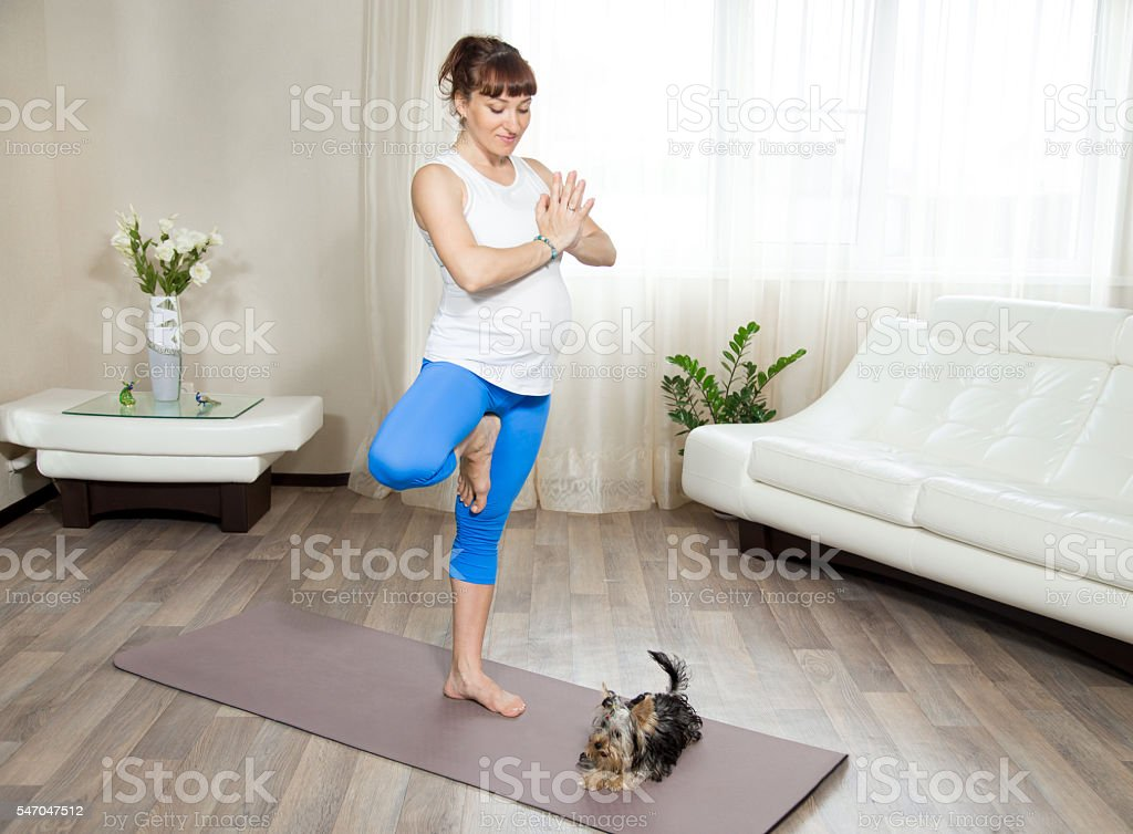 Pregnant woman and her pet dog doing yoga at home stock photo