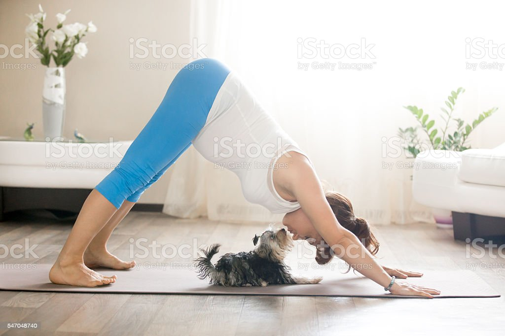 Pregnant woman and puppy practicing dog yoga pose at home stock photo