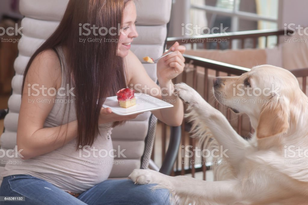 Pregnant women and a dog stock photo