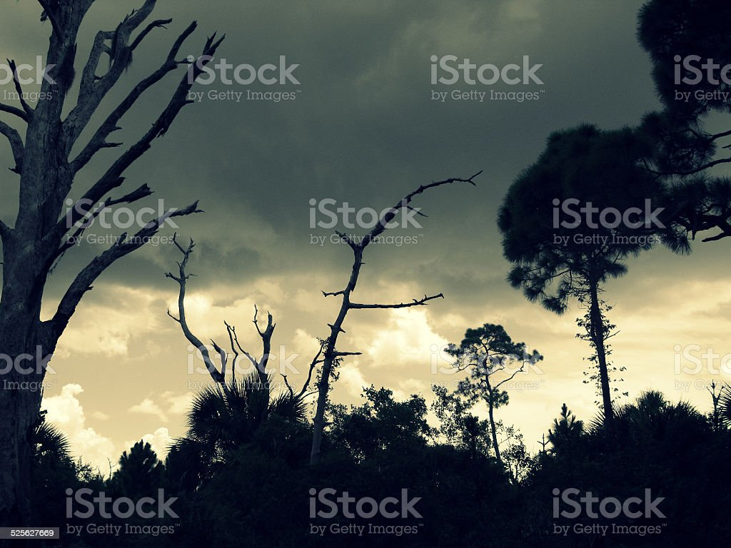 Prehistoric Bare Tree Silhouettes against Ominous Sky, Florida stock photo
