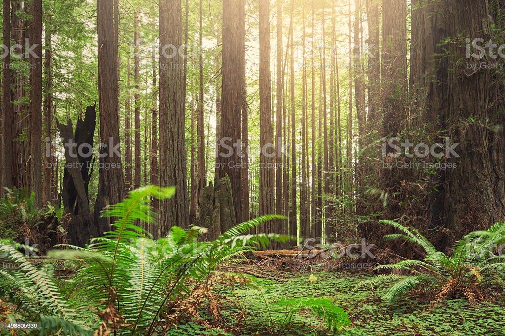 Prehistoric forest stock photo