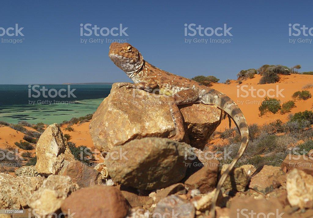 Prehistoric Monster or Little Lizard? royalty-free stock photo