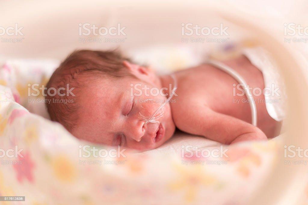 Premature newborn  baby girl stock photo