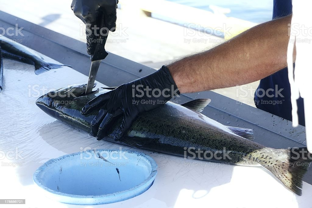 preparation of a salmon royalty-free stock photo