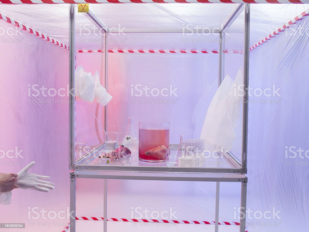 preparing for experimantation in sterile chamber stock photo