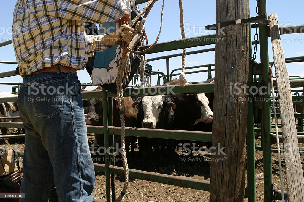 Preparing for the Rodeo stock photo