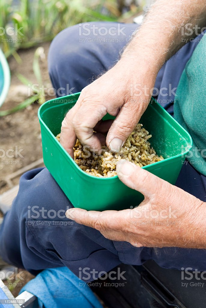 Preparing Maggot in fishing competition stock photo