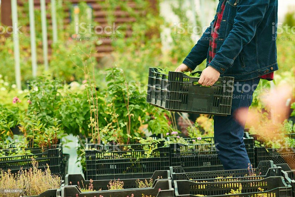 Preparing seedlings stock photo