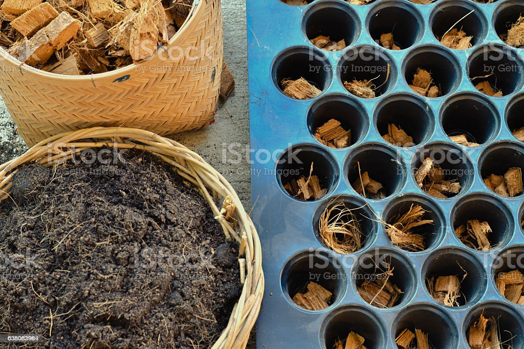 Preparing soil and coconut spathe fiber for cultivation stock photo