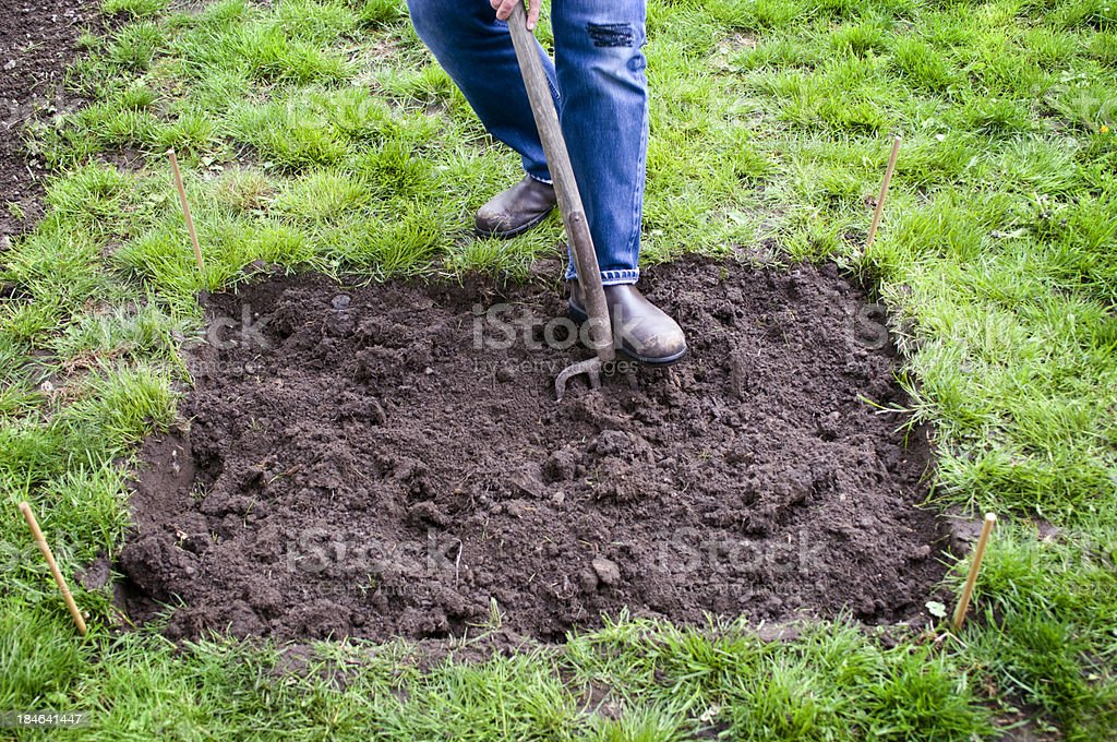 Preparing the earth for a vegetable patch stock photo